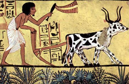 Figura 2: Aratro dell'antico Egitto