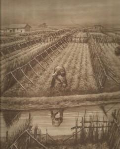 Grisiole o arelle a tutela delle colture degli orti dell'estuario.