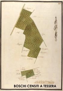 Rilievo cartografico di tipo proto-catastale (sec. XVIII°) di alcuni boschi censiti a Tessera
