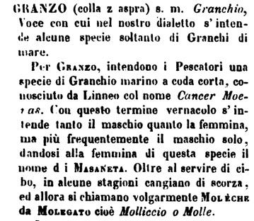Definizione del granzo o moèca dal Boerio dizionario  veneziano